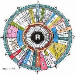 Iridology-Chart.jpg